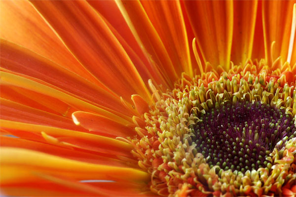 Close Up Macro Flower photography 99 17 Stunning Macro Flower photography