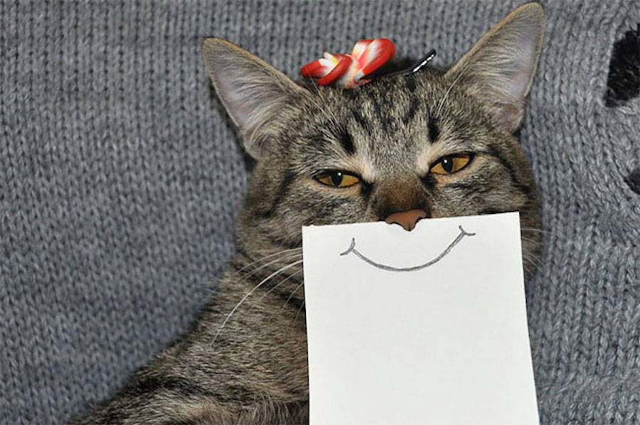 Creative Funny Drawing Ideas Creative Drawing Ideas: Funny Cat Facial Expressions by LukeHero