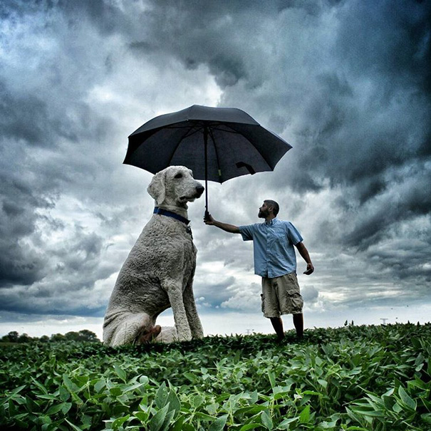 Creative Photoshop manipulations With Giant Dog by Christopher Cline Wonderful Imaginative Adventures With Giant Dog by Christopher Cline