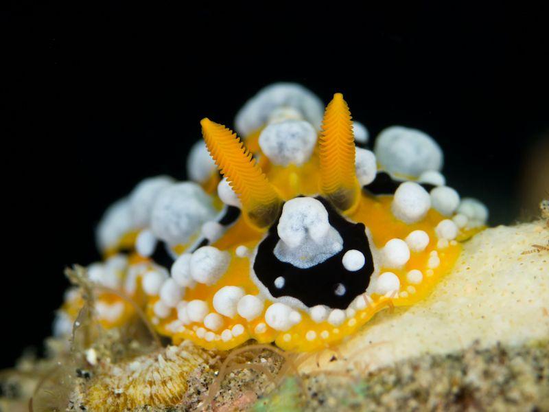 Cute Macro Underwater Photography 99 15 Beautiful Examples of Underwater Photography