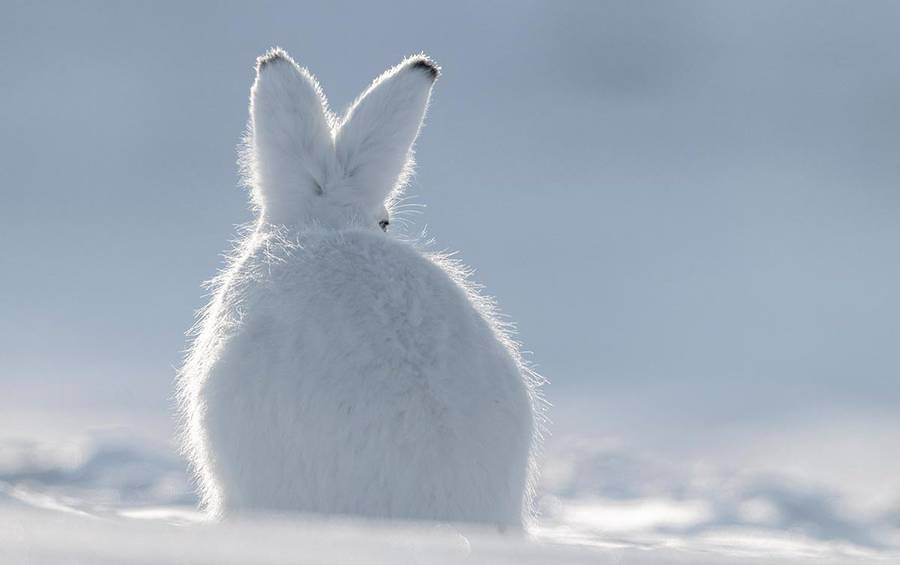 Cute Wildlife Photographs by Vincent Munier Beautiful Wildlife Photography by Vincent Munier