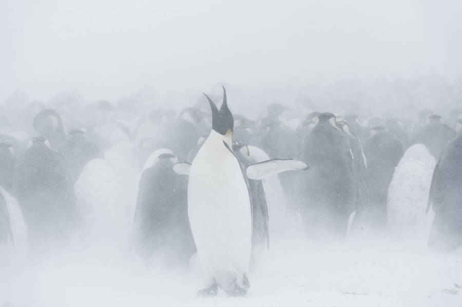 Cute Wildlife Photography by Vincent Munier Beautiful Wildlife Photography by Vincent Munier
