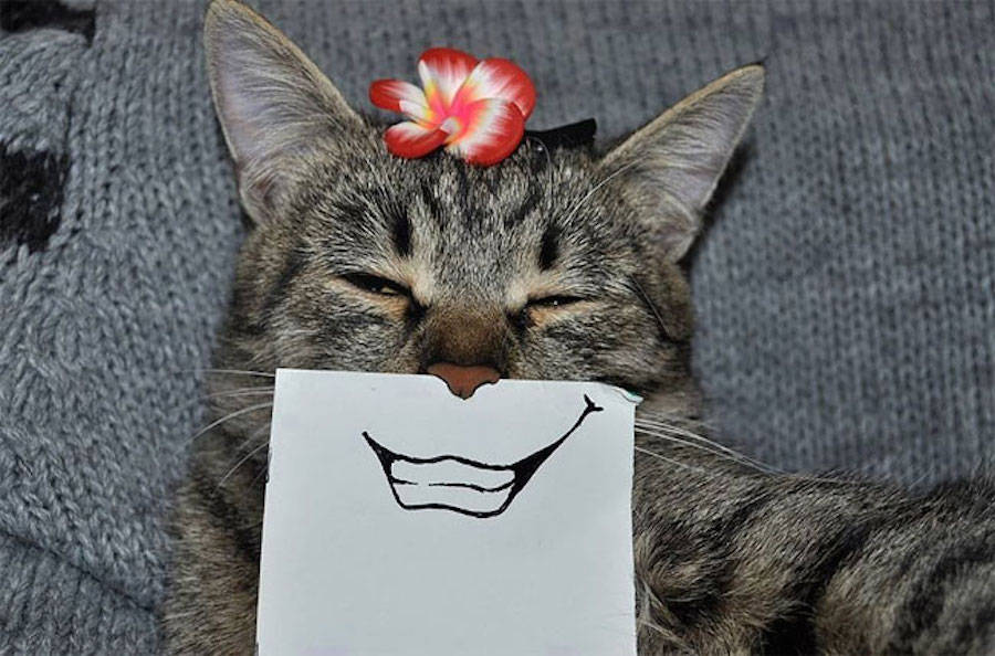 Funny Cat Facial Expressions Drawings by LukeHero 04 Creative Drawing Ideas: Funny Cat Facial Expressions by LukeHero