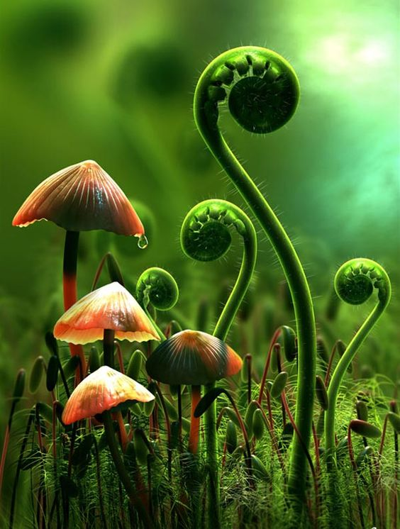 Mind blowing Mushrooms Macro Photography 99 22 Extraordinary Macro Photography of Mushrooms