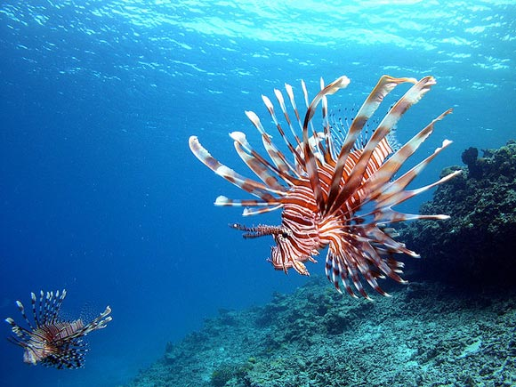 Stunning Examples of Underwater Photography 99 15 Beautiful Examples of Underwater Photography