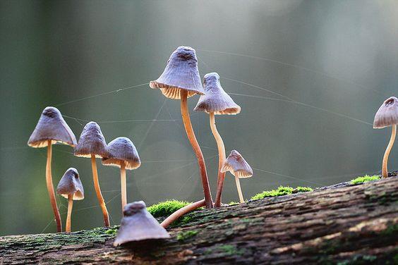 Stunning Macro Photography of Mushrooms 99 22 Extraordinary Macro Photography of Mushrooms