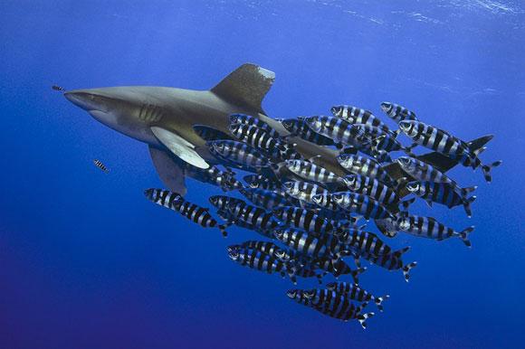 Stunning Underwater Photography 99 15 Beautiful Examples of Underwater Photography