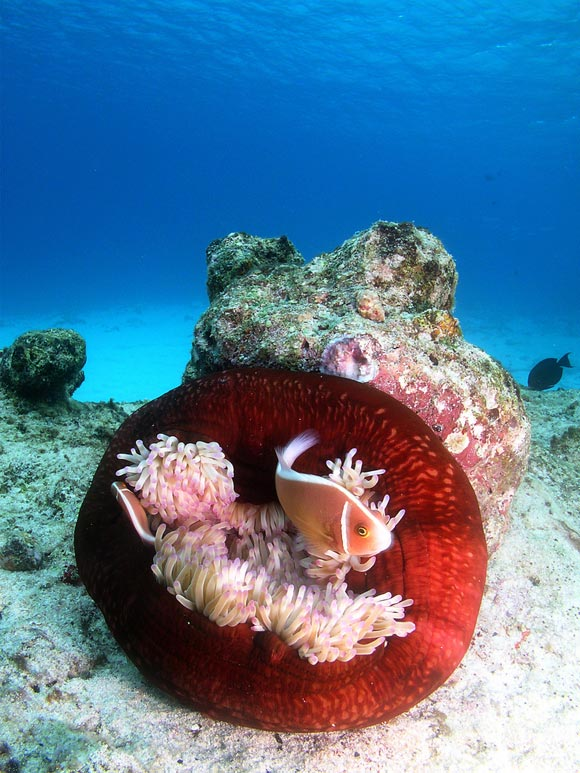 Stunning Underwater Photography of Animals 99 15 Beautiful Examples of Underwater Photography