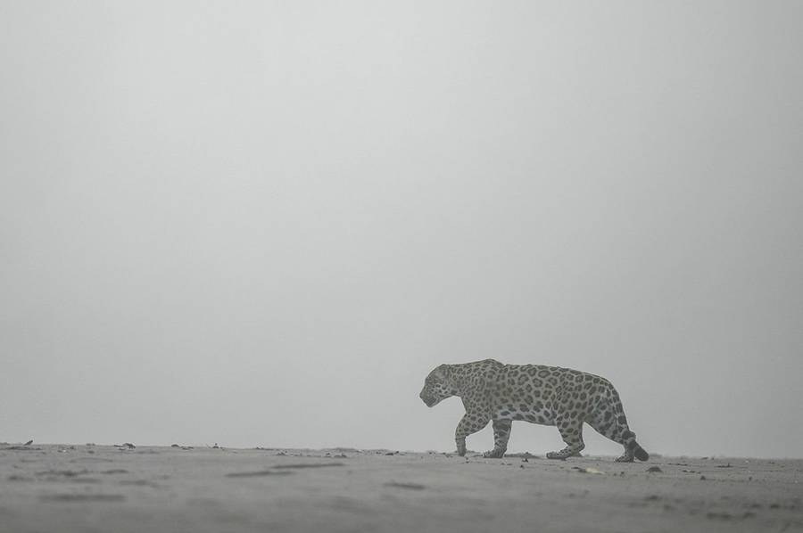 Stunning Wildlife Photography by Vincent Munier Beautiful Wildlife Photography by Vincent Munier