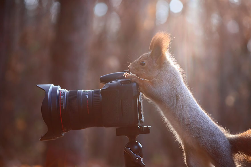 Adorable Photos Of Animals That Want To Be Photographers 11 20 Adorable Photos Of Animals That Want To Be Photographers