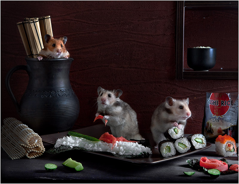 Adorable photos of hamsters life 99 Humorous photos of hamsters life by Elena Eremina