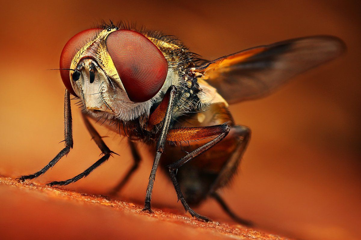 Best Examples of Insect Macro Photography 99