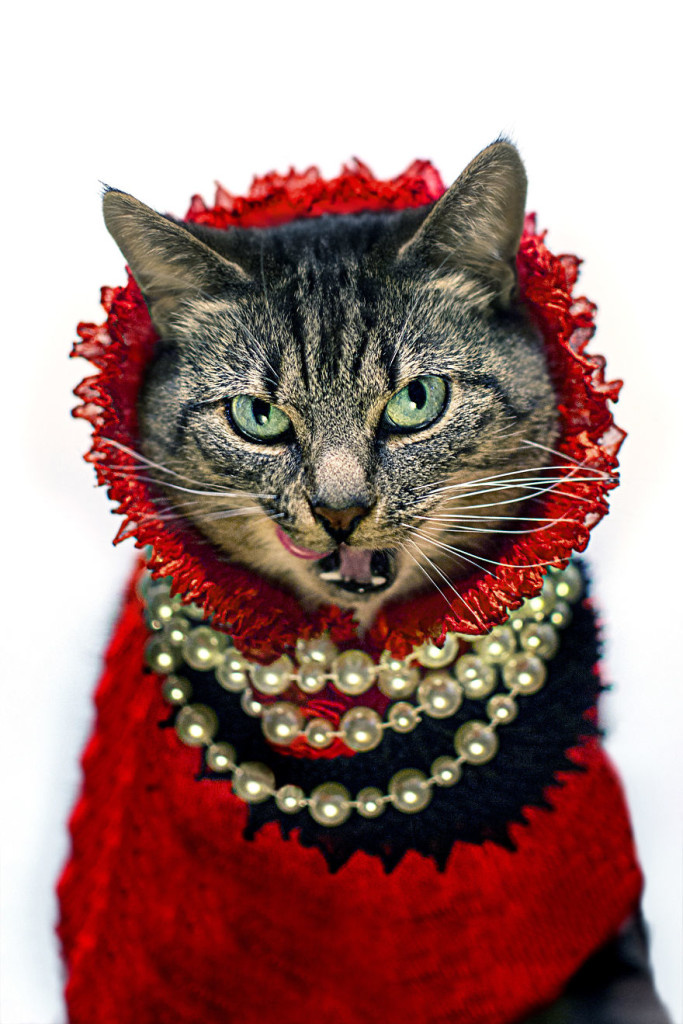 Cat Diagnosed With Feline Leukaemia Turned Into A Fashion Diva 77 683x1024 Cat Diagnosed With Feline Leukaemia Turned Into A Fashion Diva