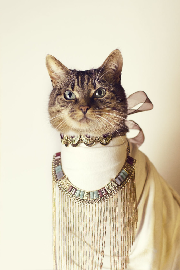 Cleopatra Hummus Cute Portrait Photography 99 683x1024 Cat Diagnosed With Feline Leukaemia Turned Into A Fashion Diva
