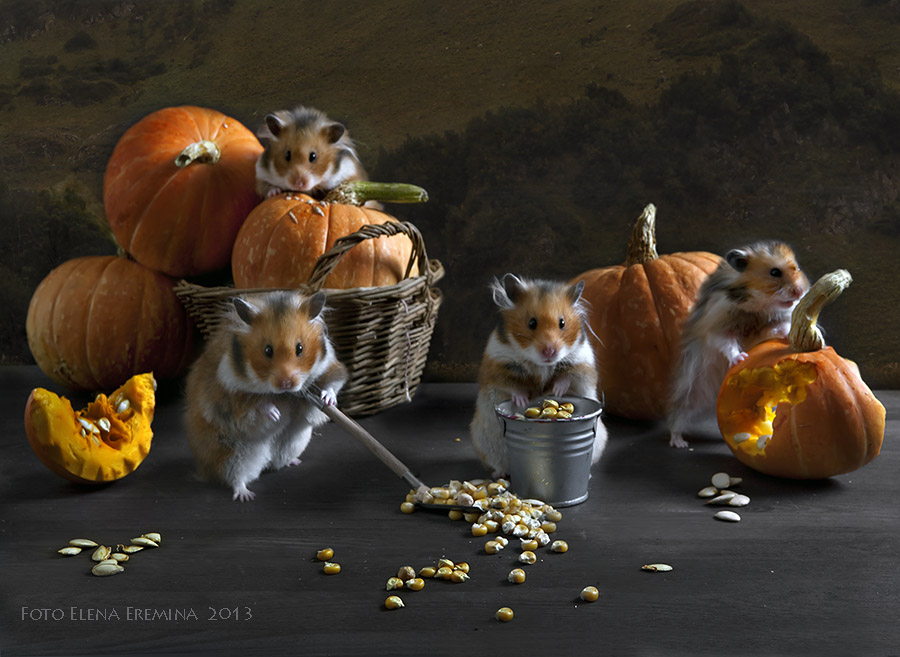 Creative Animals Photography 99 Humorous photos of hamsters life by Elena Eremina