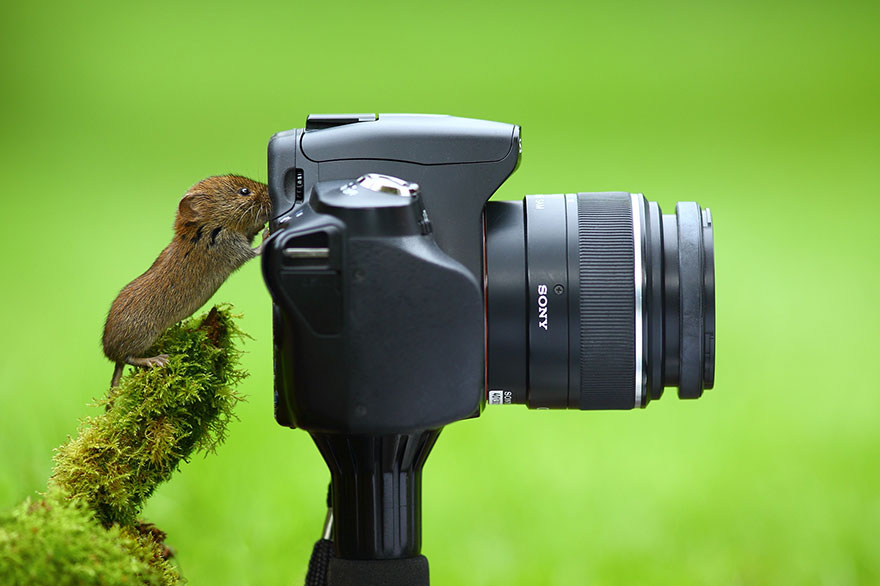 Cute Wild Animals With Camera 77 20 Adorable Photos Of Animals That Want To Be Photographers
