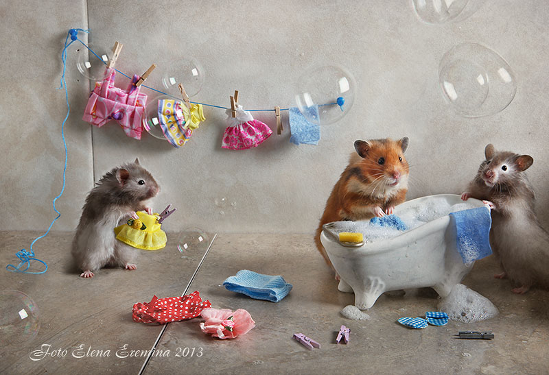 Cute photos of hamsters life by Elena Eremina 77. Humorous photos of hamsters life by Elena Eremina