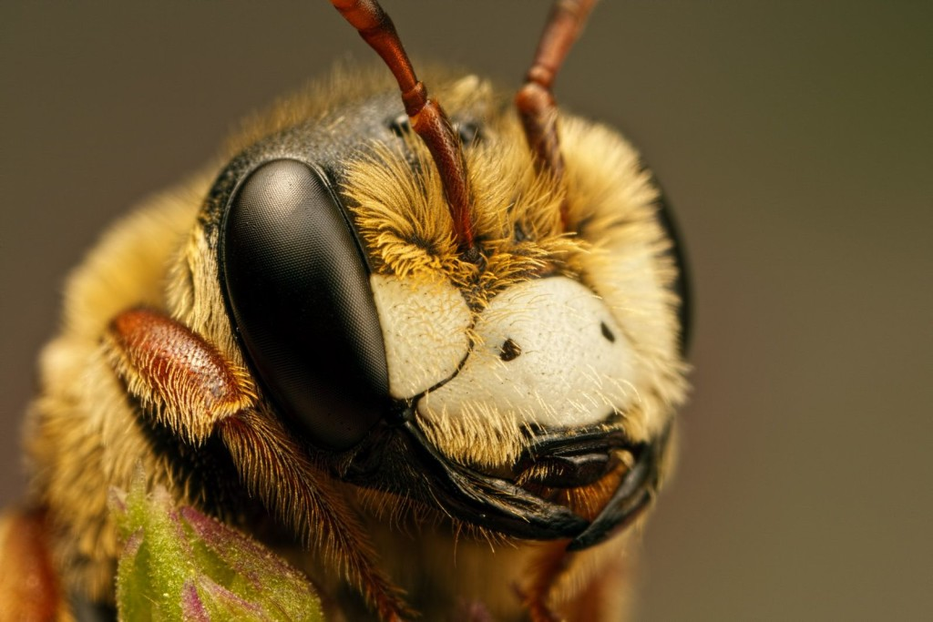 Extreme Examples Macro Photography of Insect 99 1024x683 16 Mind Blowing Examples of Insect Macro Photography