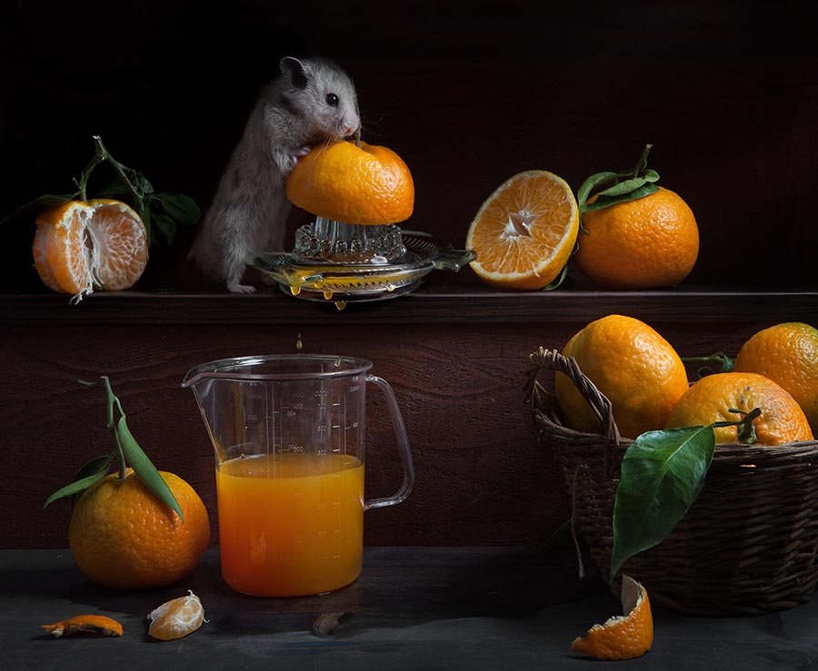 Funny Animals Photography by Elena Eremina 99 Humorous photos of hamsters life by Elena Eremina