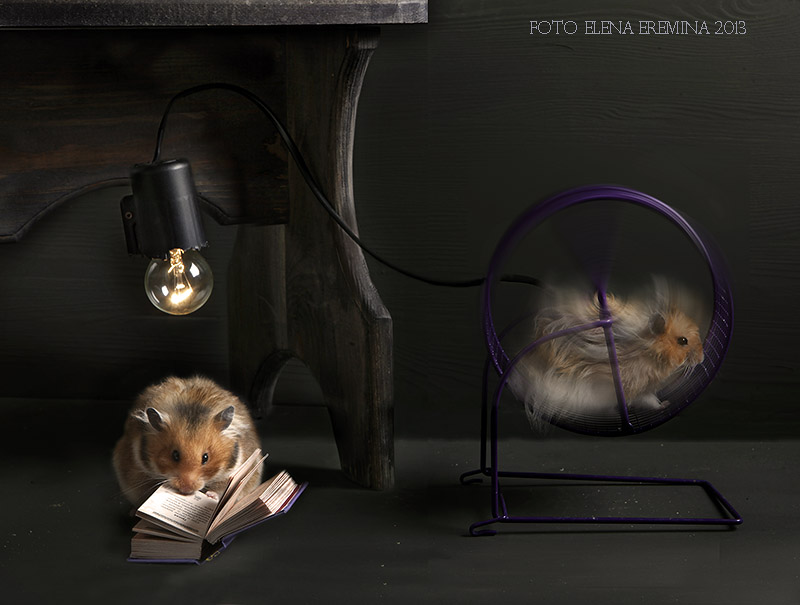 Funny Animals Photos 99 Humorous photos of hamsters life by Elena Eremina