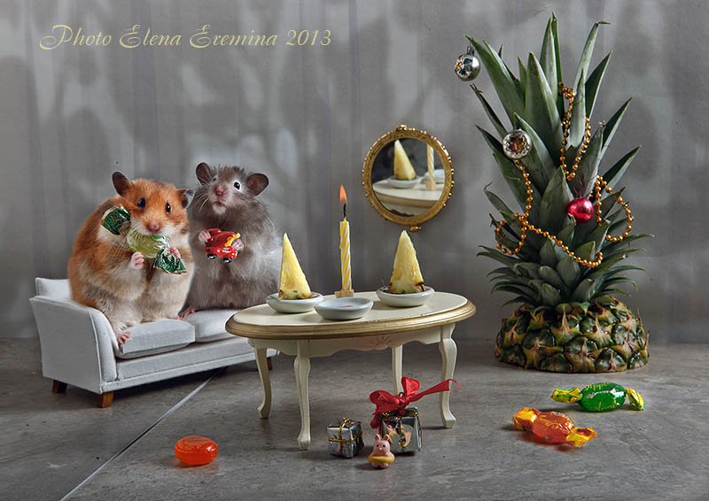 Funny Photography of Animals Life 99 Humorous photos of hamsters life by Elena Eremina
