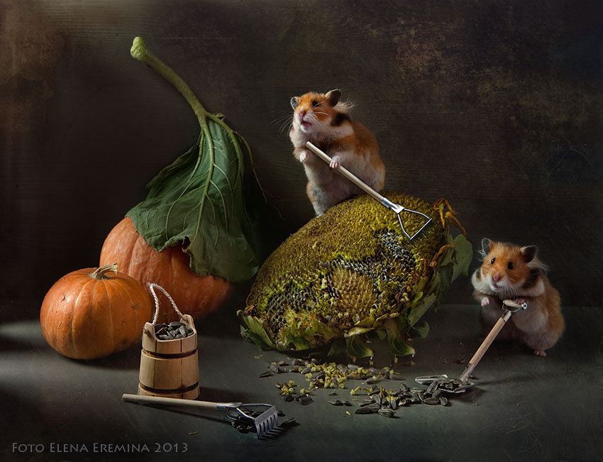 Funny Photography of Hamster Life 99 Humorous photos of hamsters life by Elena Eremina