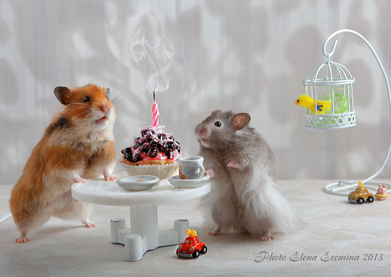 Funny photos of animals life by Elena Eremina 99 Humorous photos of hamsters life by Elena Eremina