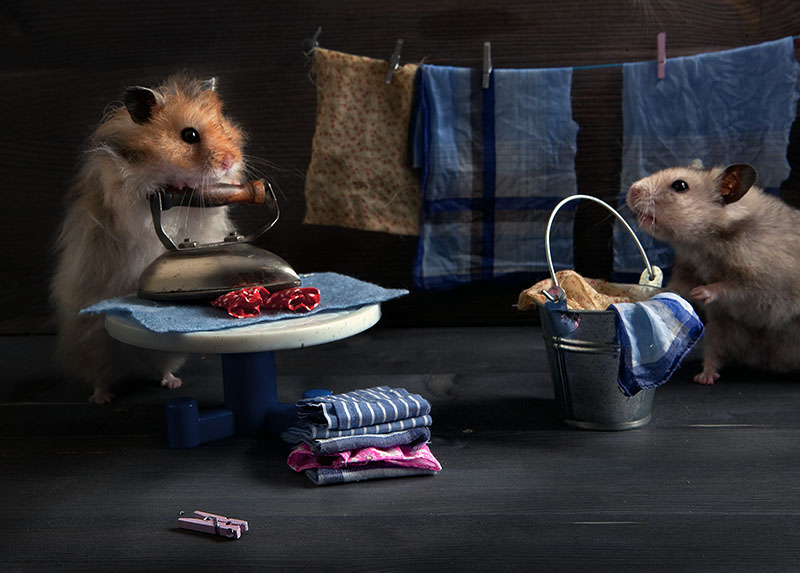 Funny photos of hamsters life by Elena Eremina 99