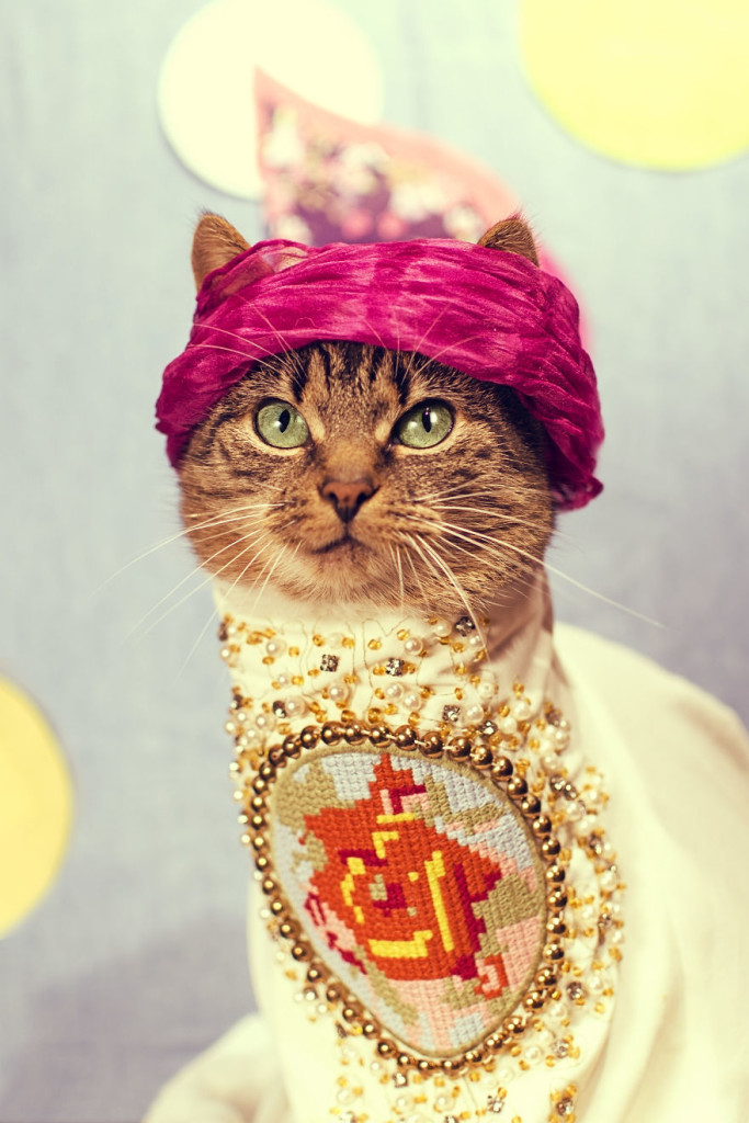 Hummus Adorable Cat Turned Into A Fashion Diva 683x1024 Cat Diagnosed With Feline Leukaemia Turned Into A Fashion Diva