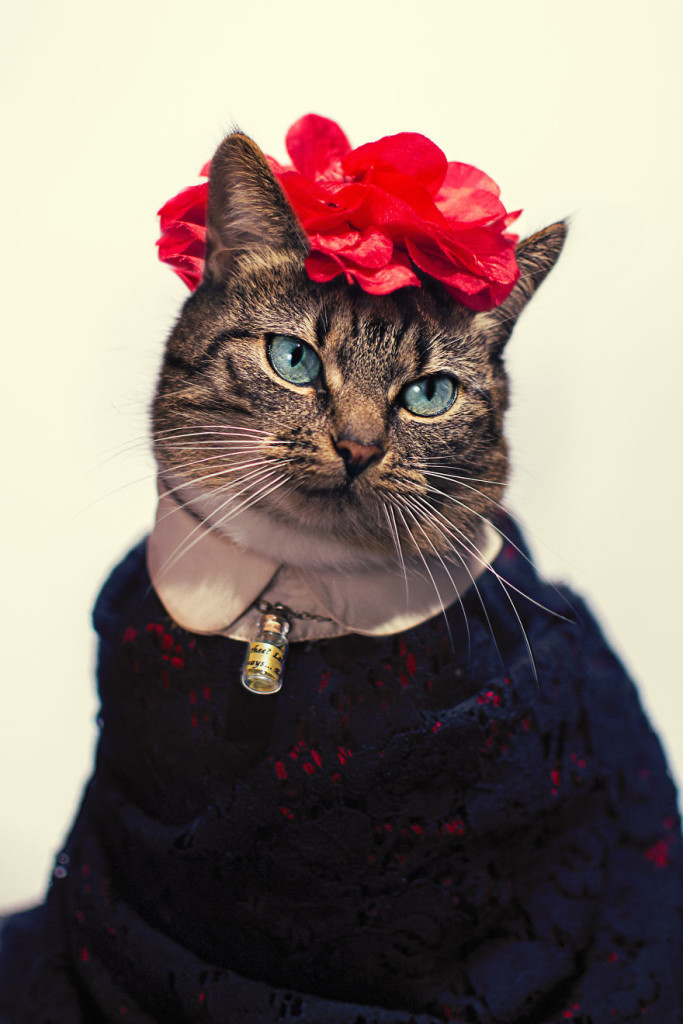 Hummus Adorable Cat Turned Into A Fashion Diva 99 683x1024 Cat Diagnosed With Feline Leukaemia Turned Into A Fashion Diva