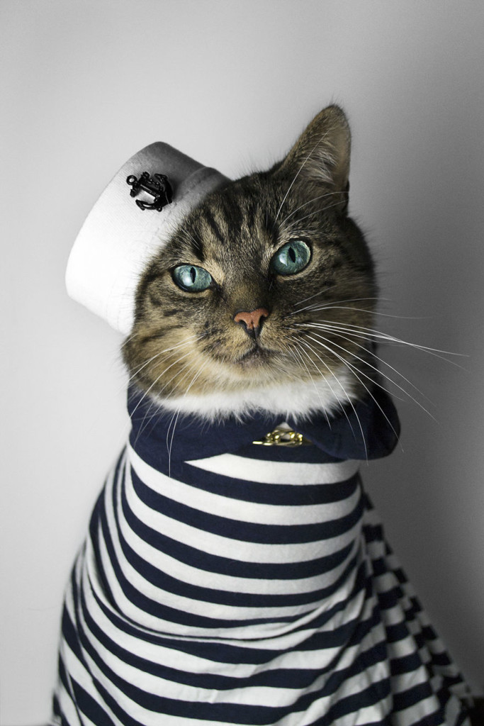 Hummus Cute Cat Turned Into A Fashion Diva 99 683x1024 Cat Diagnosed With Feline Leukaemia Turned Into A Fashion Diva
