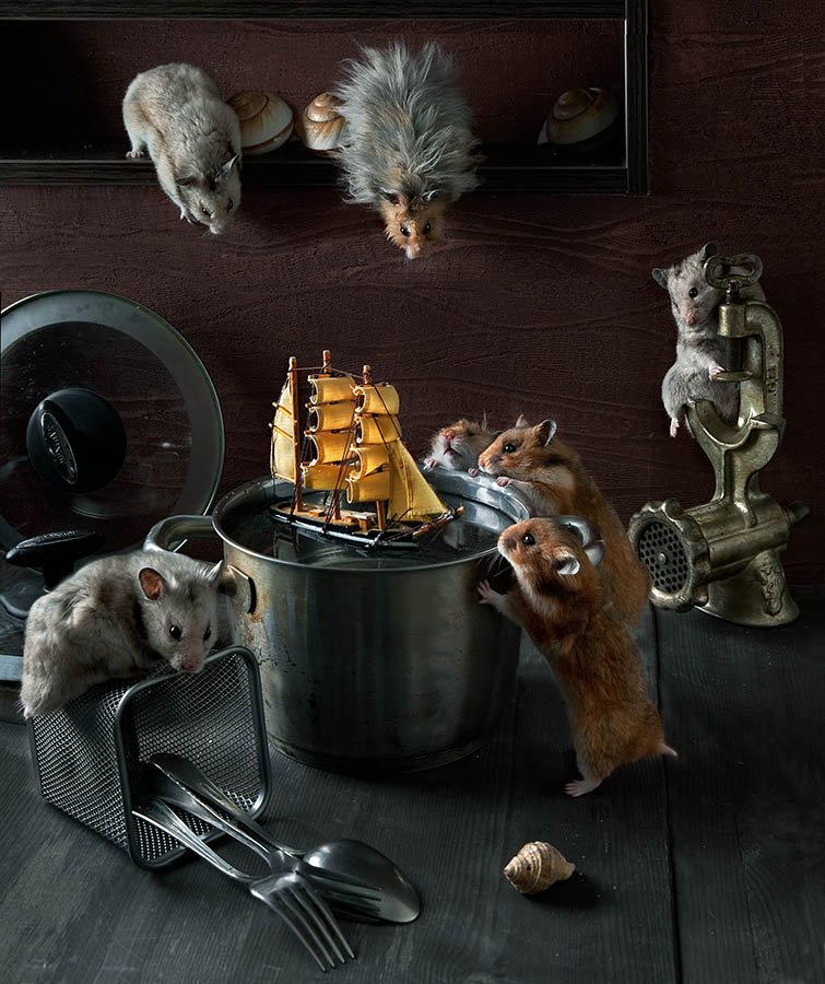Humorous photos of hamsters life by Elena Eremina 01