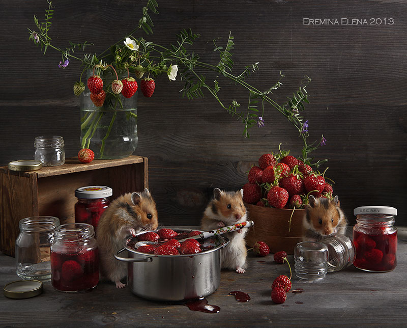 Humorous photos of hamsters life by Elena Eremina 02