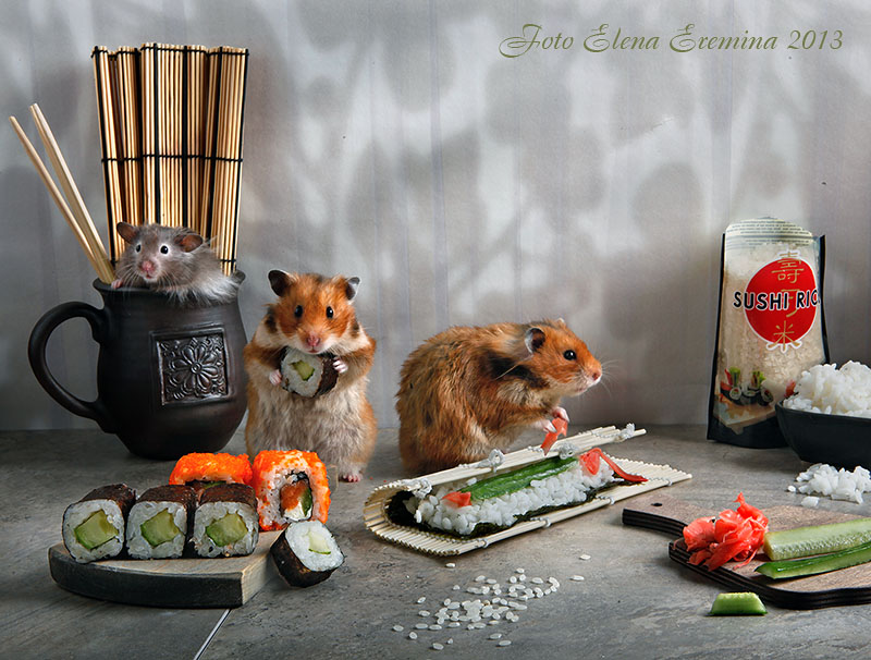 Humorous photos of hamsters life by Elena Eremina 33 Humorous photos of hamsters life by Elena Eremina