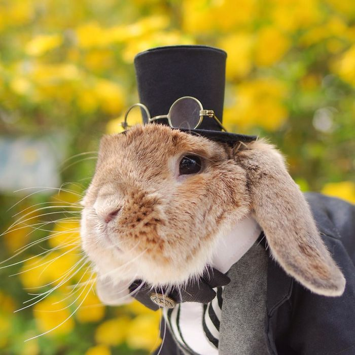 PuiPui The World's Most Adorable Bunny 77 Meet PuiPui, The World's Most Stylish Bunny (10+ Pics)
