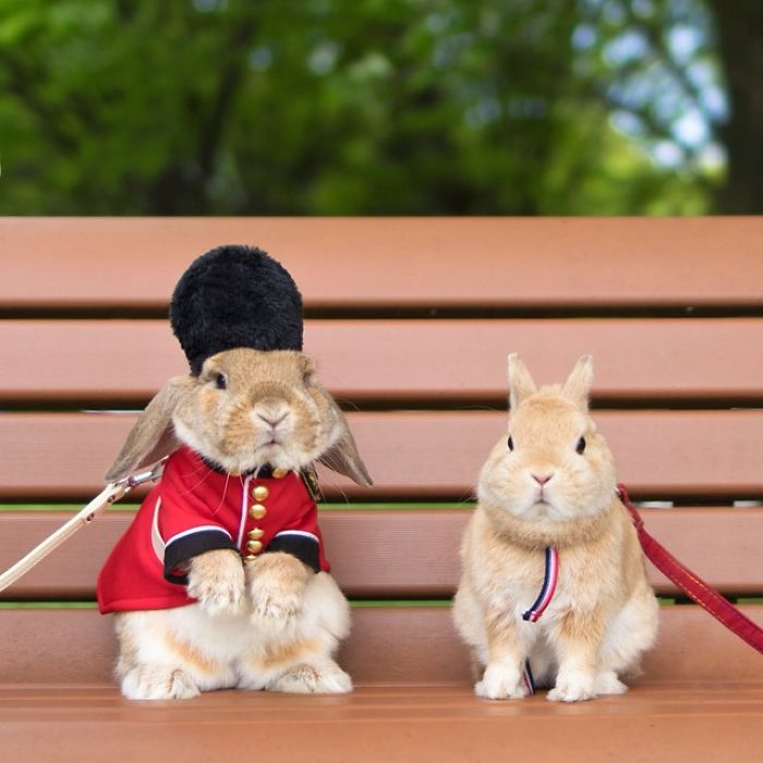 PuiPui The World's Most Stylish Bunny 77 Meet PuiPui, The World's Most Stylish Bunny (10+ Pics)