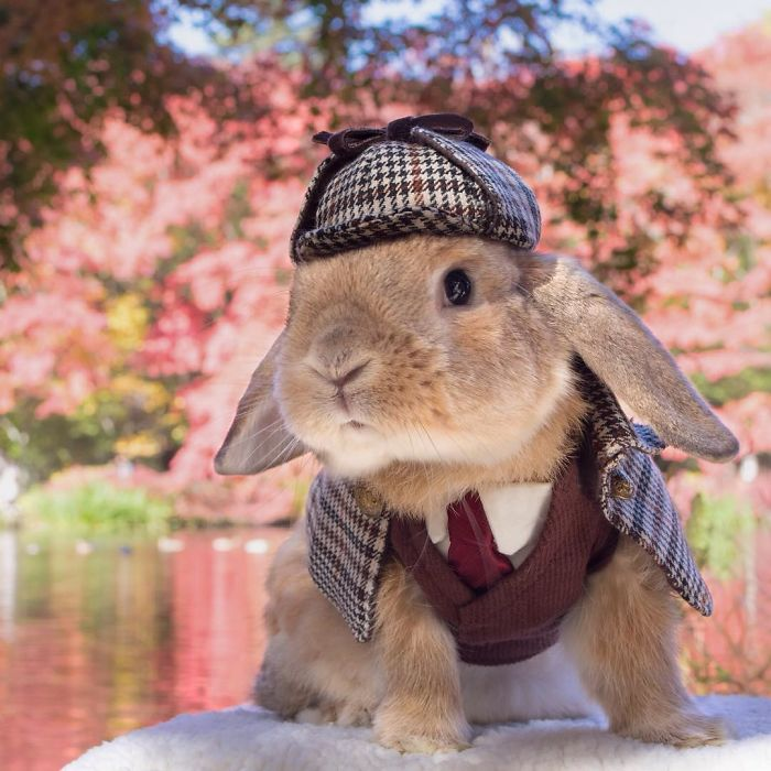 PuiPui The World's Most Stylish Bunny 99 Meet PuiPui, The World's Most Stylish Bunny (10+ Pics)