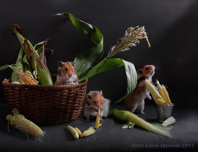 Surreal Animals Photography 99 Humorous photos of hamsters life by Elena Eremina