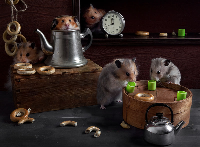 Surreal Hamster life photos 99 Humorous photos of hamsters life by Elena Eremina