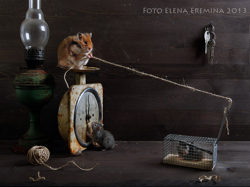 Unique Animals Photography Concept 99 Humorous photos of hamsters life by Elena Eremina