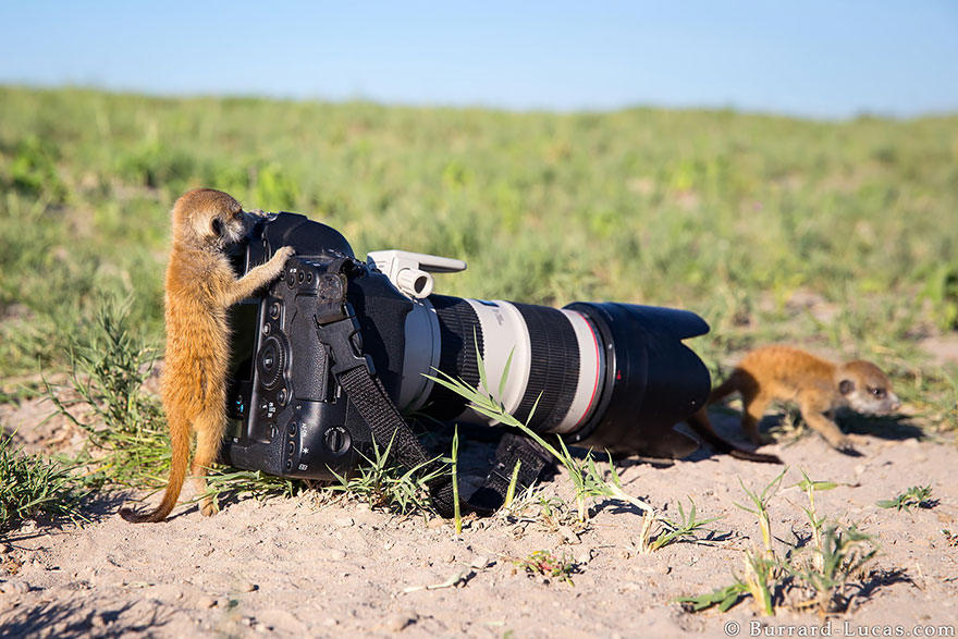 Wild Animals Want To Be Photographers 11 20 Adorable Photos Of Animals That Want To Be Photographers