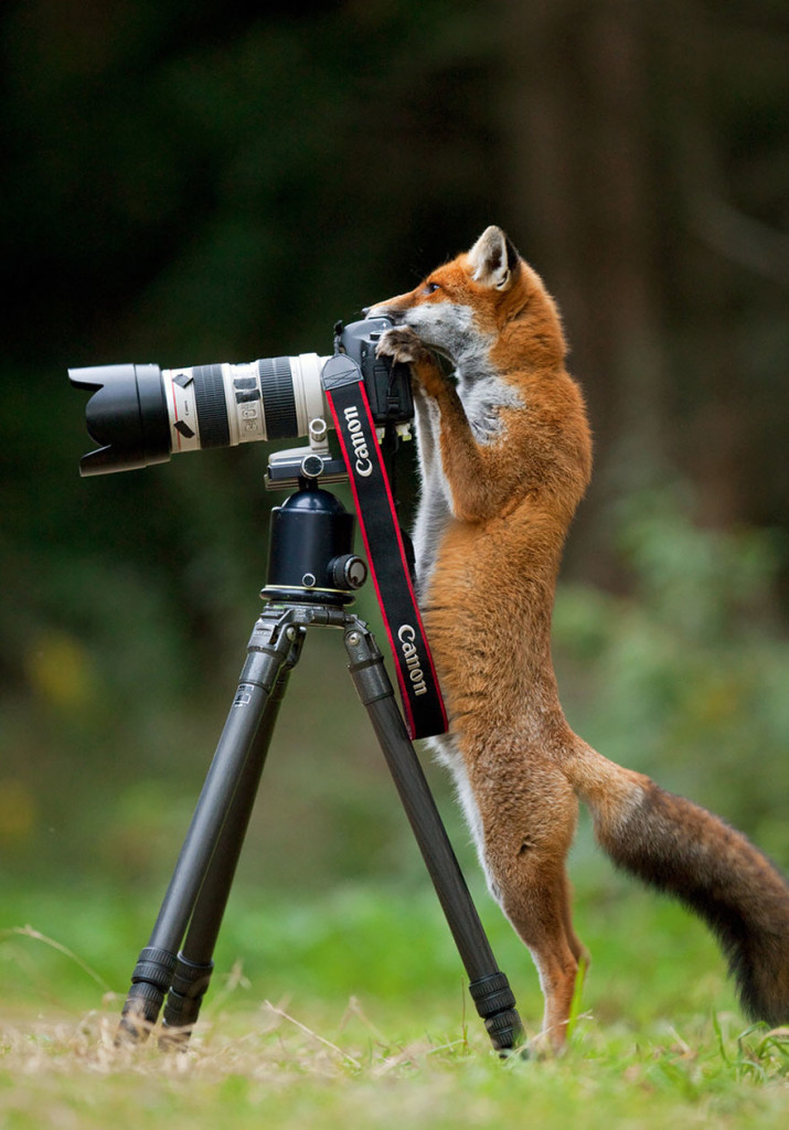 Wild Animals Want To Be Photographers 12 715x1024 20 Adorable Photos Of Animals That Want To Be Photographers