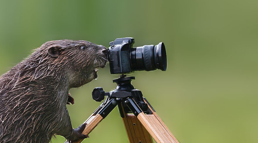 Wild Animals Want To Be Photographers 23 20 Adorable Photos Of Animals That Want To Be Photographers