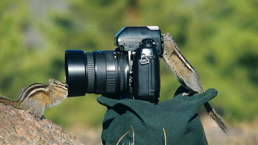 Wild Animals Want To Be Photographers 44 20 Adorable Photos Of Animals That Want To Be Photographers