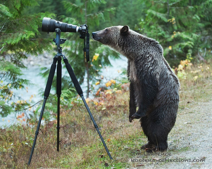 Wild Animals Want To Be Photographers 77 20 Adorable Photos Of Animals That Want To Be Photographers