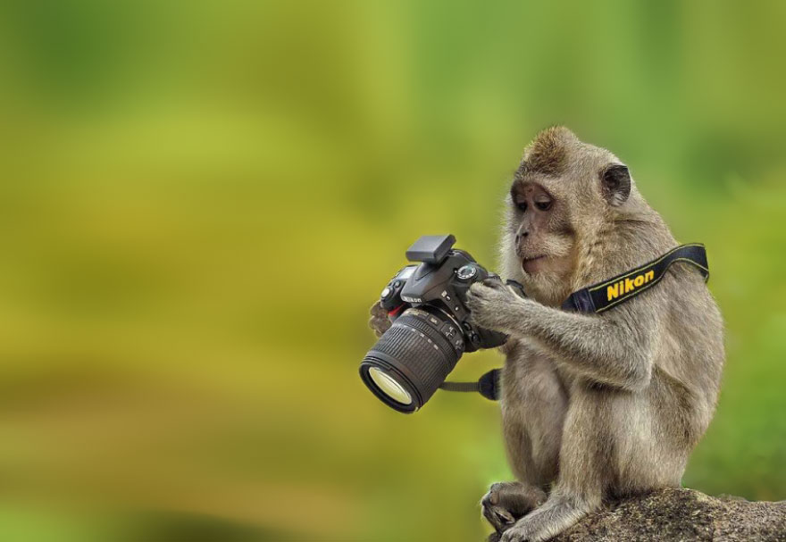 Wild Animals Want To Be Photographers 99 20 Adorable Photos Of Animals That Want To Be Photographers