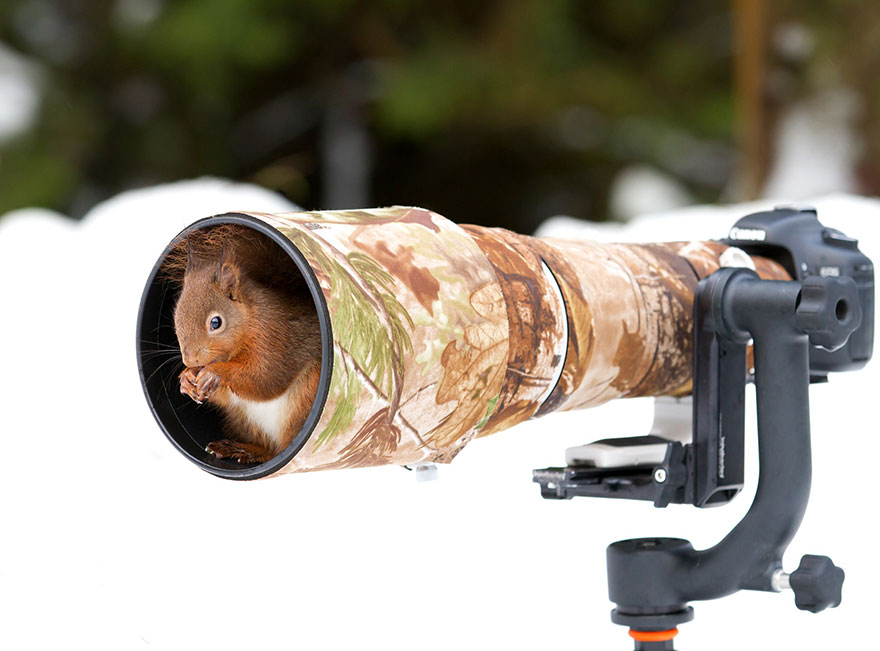Wild Animals With Camera 13 20 Adorable Photos Of Animals That Want To Be Photographers