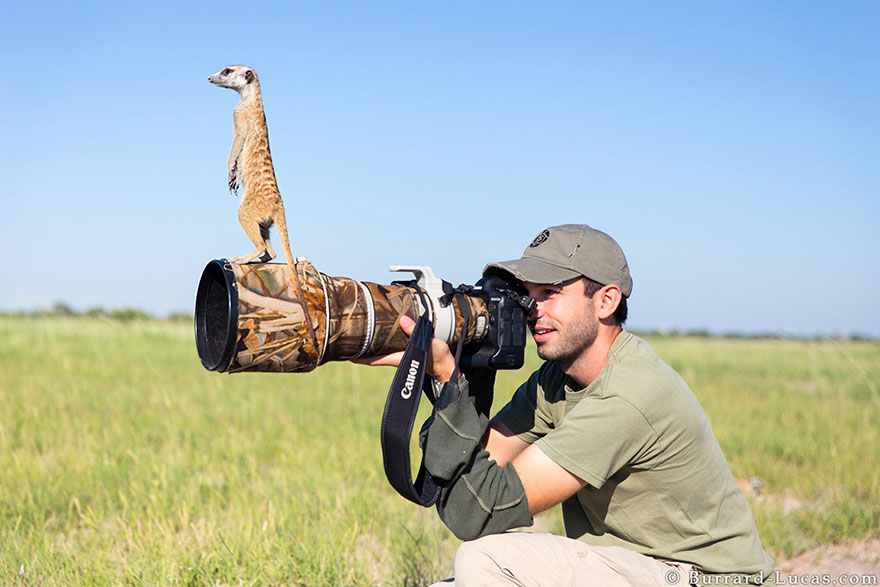 Wild Animals With Camera 22 20 Adorable Photos Of Animals That Want To Be Photographers