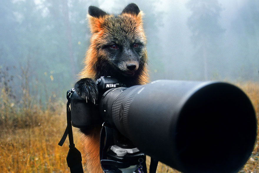 Wild Animals With Camera 33 20 Adorable Photos Of Animals That Want To Be Photographers