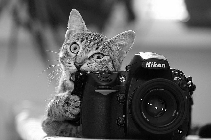 Wild Animals With Camera 44 20 Adorable Photos Of Animals That Want To Be Photographers